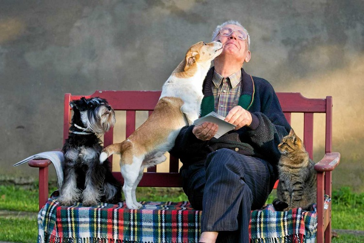 dogs and cat with owner